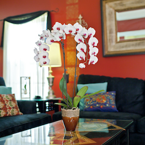 Why You Should Keep Orchids in Your Home