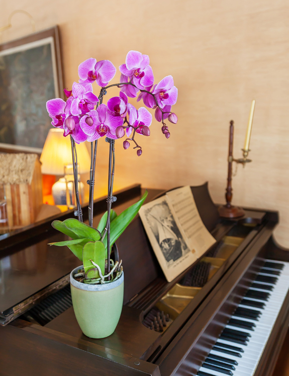 Striped-Purple-Orchid-on-Piano