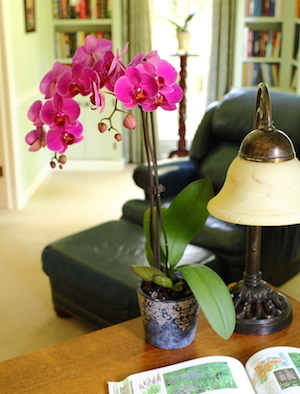 Back to School: Top 6 Reasons to Buy an Orchid for the Dorm