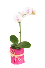 Orchids Are Perfect Gifts for Hospital, Nursing Home Patients