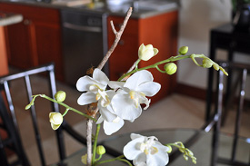 How to Dress Your Orchid Spike During Dormancy
