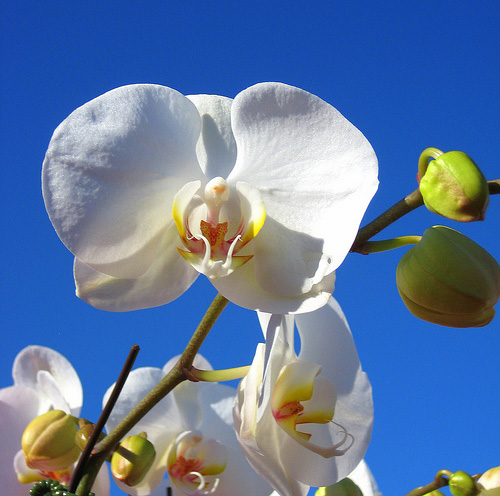 Easy Care Attracts Novice Growers to Just Add Ice Orchids