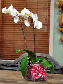 A Sweet Orchid Bouquet for Your Sweetheart