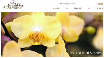 Introducing Just Add Ice Orchids Website Spring Makeover