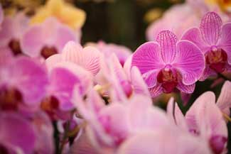 Group of orchids