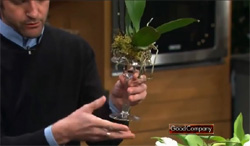 Phalaenopsis Orchids Add Elegance to Candlestick Centerpiece