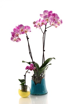 Creating Your Own Decorative Orchid Pot