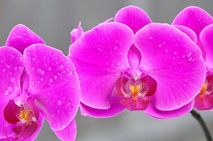 How to Treat Orchid Diseases