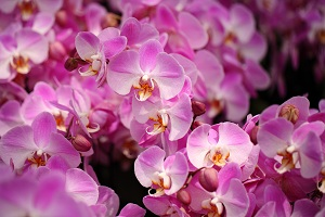 orchid fertilizer tips