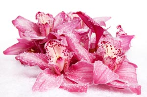 Orchids brighten up your winter blues