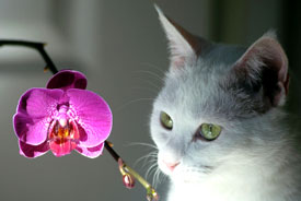Orchids and Pets Can Cohabitate