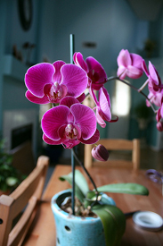 How Do Orchids Grow?