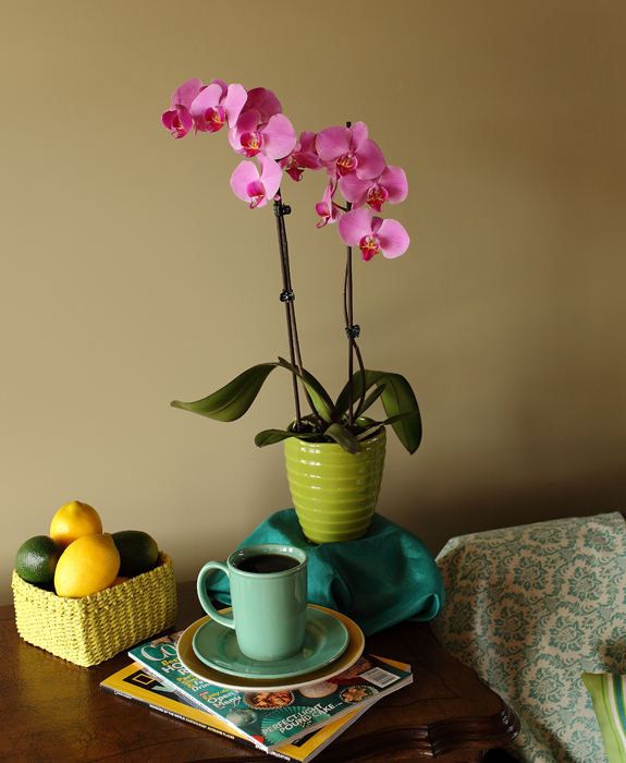 Orchids have been a favorite among flower collectors
