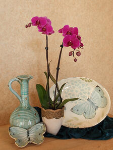 welcoming-orchids-into-your-home