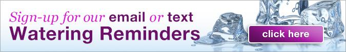 RemindersTextEmail
