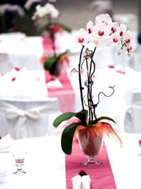 Phalaenopsis Orchids Impart Elegant Air to Winter Wedding Receptions