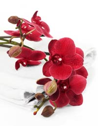 Vera Wang Recommends Orchids