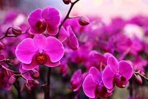 Just Add Ice Watering Method Makes Orchid Care Simple