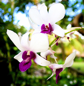 Look Up, Look Down. Orchids Grow Everywhere!