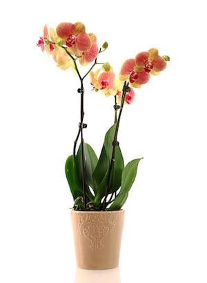 The Top 5 Orchid Fertilizing Questions Answered