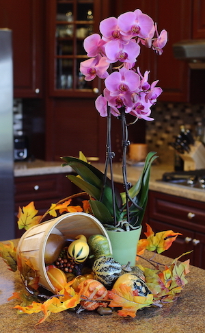 6 Reasons You Should Give an Orchid to Your Thanksgiving Host