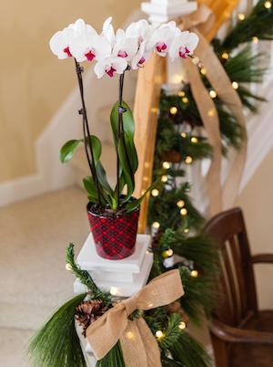 Орхидея девушке в подарок 34