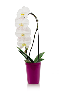 Can My Orchid and My Pet Coexist?