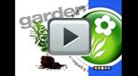 stagesofjustaddiceorchidsgrowth