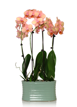 Orchid Planters
