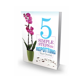 5 simple steps to repotting