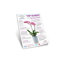 10 Ways to Keeping Your Orchid Healthy