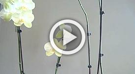 flower loss