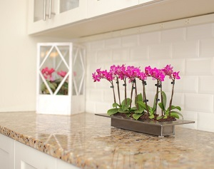 Learn How to Live With Phalaenopsis Orchids