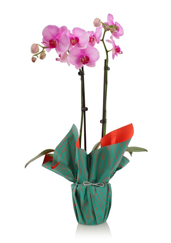Are You Allergic to Your Orchid?
