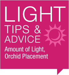 Light Tips & Advice