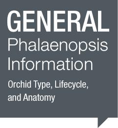 General Phalaenopsis Information