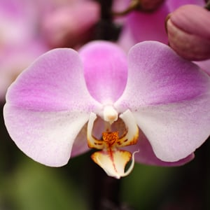 The Early Life and Times of Orchids