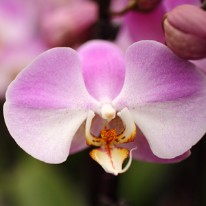 early-life-of-orchids