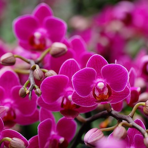 4 Reasons Why Purple is More Than Just a Radiant Orchid Color