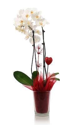 4 Reasons Orchids Are the Ultimate Valentine's Day Flower