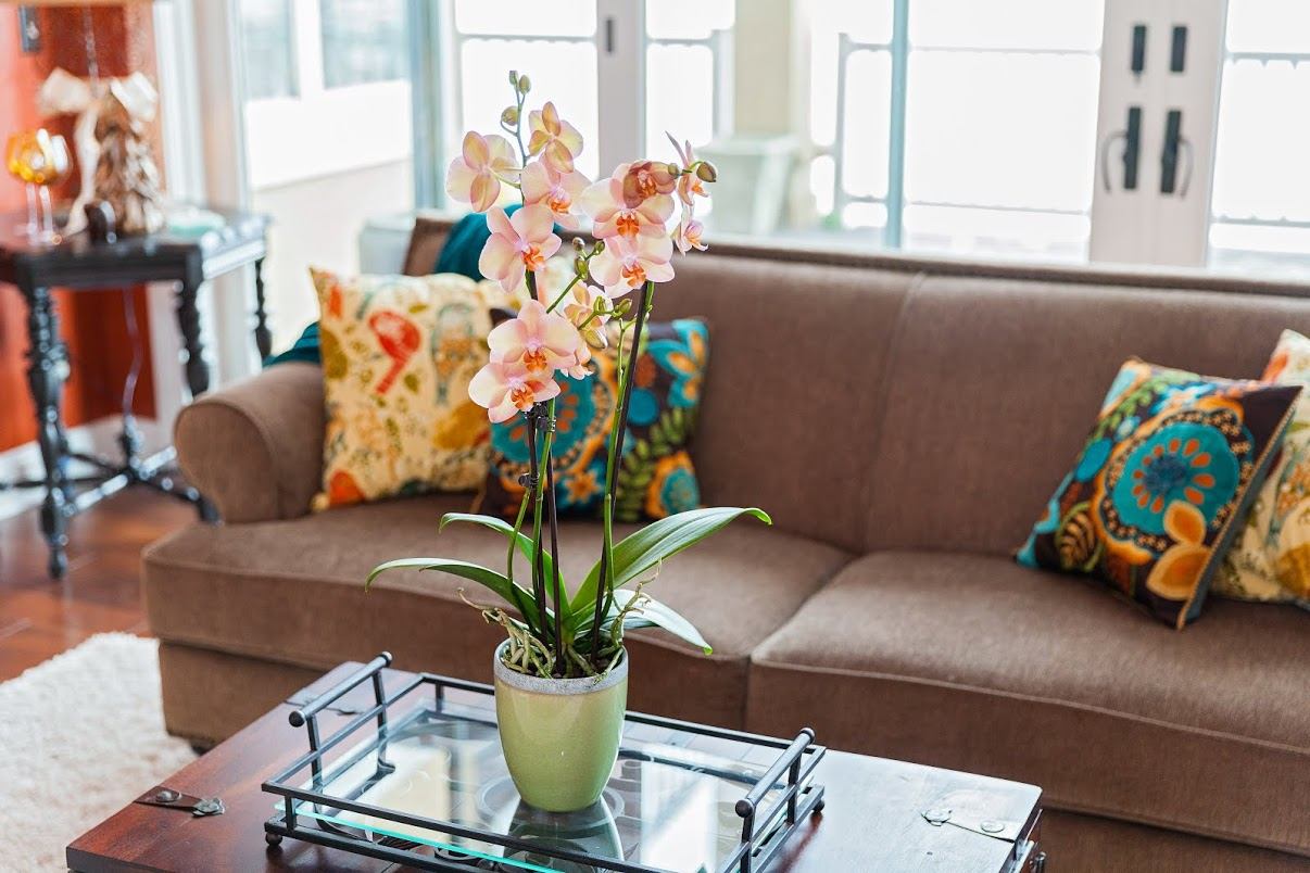4 Simple Ways You Can Decorate Your Home Like a Professional
