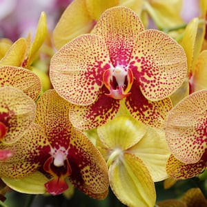 how to take care of an orchid after it blooms