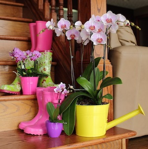 Springtime Orchid Decorating Ideas That Will Liven Up Your Home