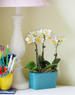 4 Reasons to Keep Orchids in Your Office