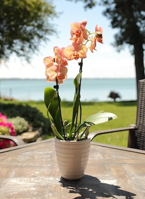 4 Breezy Spring Threats to Avoid for Orchid Health