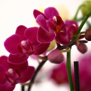How Orchid Color Can Spark Creativity & Soothe Frazzled Nerves