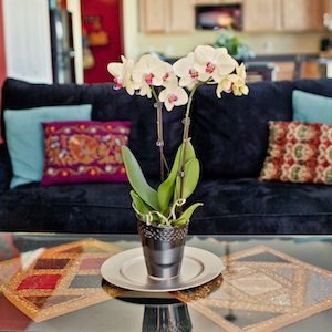 5 Ideas for Interior Decorating with Orchids