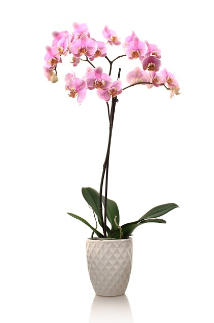 3 Orchid Care Products You Probably Already Have at Home
