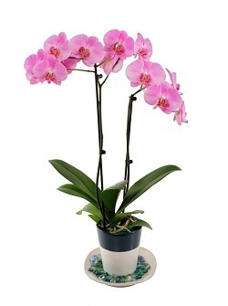 How to Care for Orchids in a Dry Environment