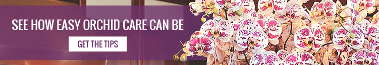 Phalaenopsis Orchid Pests: How to Get Rid of Scale